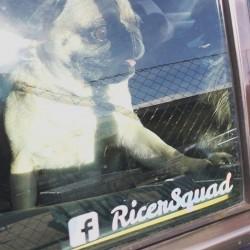Logo Facebook RicerSquad